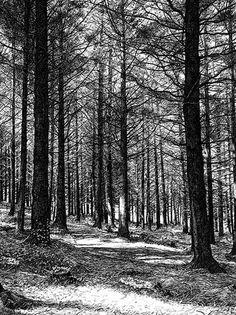 The Quiet Forest by Sarah Woolfenden.