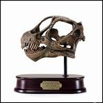 Camarasaurus Dinosaur Skull Model - This handsome dinosaur skull model is highly detailed from polyresin and is mounted on a solid wood base. $69.00 in stock and ready to ship today! Shop www.DinosaurToysSuperstore.com