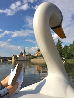 Things to do in Prague: Take a swan paddle boat ride! | Southern Flair #prague #southernflair #travel