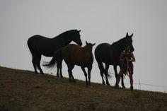 tiziana cavalli estate