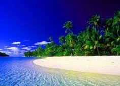 Resultado de imagen para imagenes de palmeras en la playa