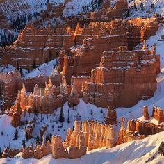 """WEBSTA @ natgeo - Photo by @TimLaman. My first sunrise ever at Bryce Canyon National Park, Utah, a few days ago. What a spectacular place! It's simply mind-boggling how beautiful and diverse our natural world is. The fresh snow was beautiful, but the temperature at -21 degrees C ( -6 degrees F) was not for the feint-hearted. Unique soft limestone formations here have eroded into these unusual """"hoodoo"""" formations largely through the freeze-thaw cycle that happens so many days of the year..."""