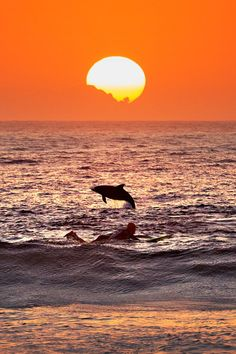 wolverxne: Dolphin and surfer at sunrise, Bondi Beach, Australia - by Bondi Rescue Cool Pictures, Cool Photos, Beautiful Pictures, Amazing Photos, Beach Photos, Silhouettes, Wale, Beautiful Sunrise, Ocean Life