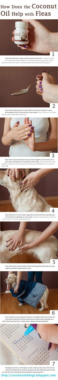 How to use coconut oil for dog fleas