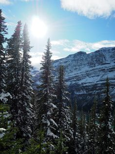 Winter Wonderland am Peyto Lake, absolutes Icefield Parkway Highlight!