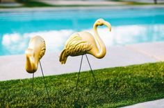 Pink no more – the tale of copper lawn flamingos   A PMQ for two (and three pets)