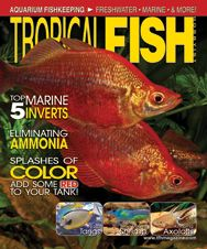 The October 2012 issue of TFH featured articles on everything from eliminating ammonia in the aquarium to keeping naso tangs, caring for axolotls, and much more!