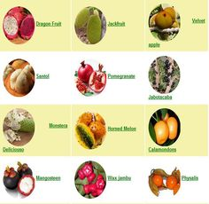 buy exotic fruits tropical fruits