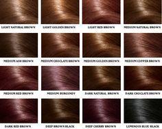hair colour chart - Google Search