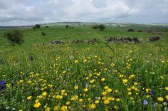 Israel - Golan Heights landscape