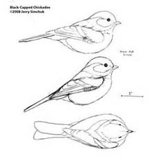 Plans for Wood Carving Birds - Bing Images Wood Carving Tools, Dremel Carving, Wood Carving Patterns, Wood Patterns, Woodcarving, Whittling Patterns, Soap Carving, Bird Sketch, Whittling Wood