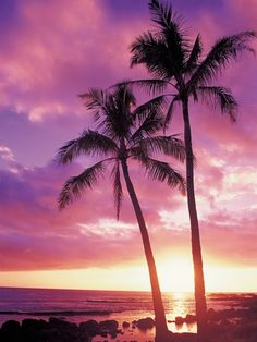 Palm Trees Hawaii