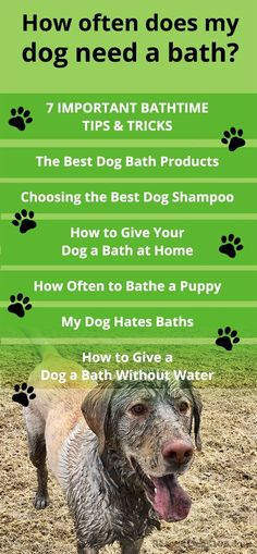 7 Important Dog Bathing Tips How often does my dog need a bath? The Best Dog Bath Products Choosing the Best Dog Shampoo How to Give Your Dog a Bath at Home How Often to Bathe a Puppy My Dog Hates Baths How to Give a Dog a Bath Without Water Dog Grooming Salons, Dog Grooming Tips, Bathing A Puppy, Baby Bathing, Best Dog Shampoo, Dog Care Tips, Pet Care, Pet Tips, Rescue Puppies
