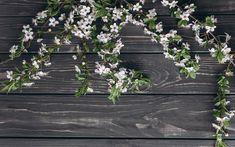 تحميل خلفيات المزهرة أبل, الزهور البيضاء, الربيع, فروع, الرمادي الخشب الخلفية, شجرة التفاح فروع