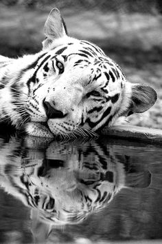 love the reflection in the water!