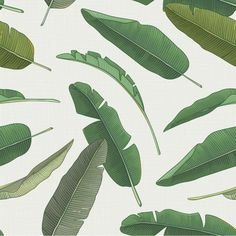 Trendy green Banana Leaves on neutral background removable wallpaper by WallsNeedLove. See more at wallsneedlove.com