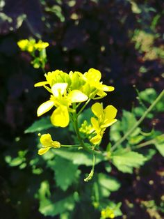 The very beautiful flower! #Sunday #Beautiful #Flower #Bringle #BringleFlower #Farm #Farmer #FromFarm #MyFarm