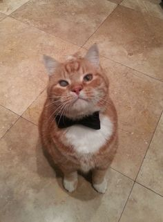 This cat looks like a James Bond Villain
