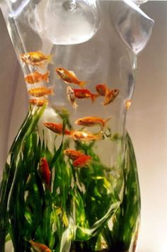 I need to be friends with the person who created this fish tank.