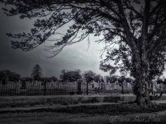 #Dark #Spooky #Graveyard #Cemetery Black & White Fence by DamnQueMala on #Etsy #horror #halloween #death