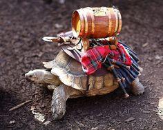 War Tortoise moving along at near walking pace at the Minnesota Renaissance Festival. (by gbrummett, flkr)