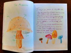 5th grade ~ Botany ~ Fungi ~ main lesson book