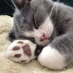Awwww! - Click to see loads of great pictures of cats and kittens to brighten your day.