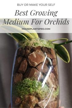 Outdoor Flowering Plants, Indoor Orchids, Plants Indoor, Indoor Gardening, Container Gardening, Gardening Tips, Orchid Roots, Orchid Leaves, Orchid Flowers