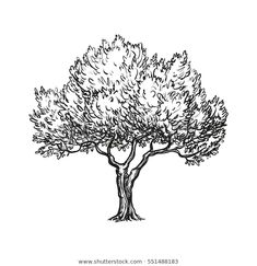 Fish Silhouette, Silhouette Vector, Tree Illustration, Ink Illustrations, Digital Illustration, Free Vector Images, Vector Free, Old Paper Background, Tree Sketches