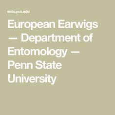 European Earwigs — Department of Entomology — Penn State University Earwigs, Squash Bugs, Insect Species, Pest Management, State University, Moth, Beetles, Oriental, Gardens