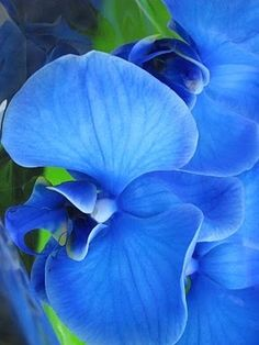 Blue Mystique Orchid by TARIKISA