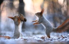 Whose are cones in the woods? by Vadim Trunov - Photo 130423321 - 500px