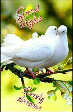 Good Night Song, Lovely Good Night, Good Night Wishes, Good Night Sweet Dreams, Good Night Image, Good Night Quotes, Good Morning Photos, Good Morning Flowers, Nicolas Vanier