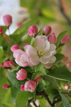 love roses are red love roses are red, flores naturales Flowers Nature, Spring Flowers, Amazing Flowers, Pretty Flowers, Red Flowers, Beautiful Flowers Wallpapers, Pink Garden, Spring Blossom, Flower Aesthetic