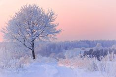 - 24 by ginaups