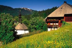 Black Forest near Titisee - Neustadt, Germany