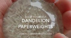 How to Make a Dandelion Paperweight - This video is a step by step description of how to make a dandelion paperweights from a real dandelion seed head. Visit http://www.DandelionPaperweights.com or http://www.Paperweightster.com