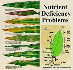 Gardening | Tipsögraphic | Use this simple reference chart to determine disease, watering, and nutrient deficiency issues in your plants simply by the shape and color of their leaves.