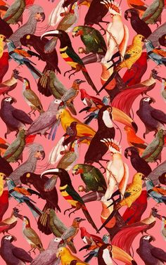 If you're a fan of maximalist interiors, check out this tropical bird wallpaper that's full of colourful tones. Tropical Birds, Tropical Leaves, Bird Wallpaper, Pattern Wallpaper, Maximalist Interior, Pink Backdrop, Pink Home Decor, Bird Patterns, Bird Prints