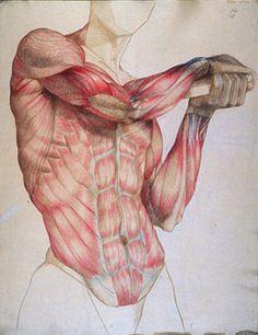 tutoriales de dibujo anatomia humana - Buscar con Google