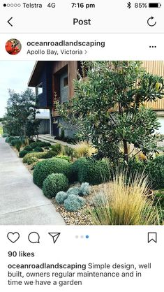 Need some pruned round shaped foliage? Need some pruned round shaped foliage? Backyard Walkway, Driveway Landscaping, Modern Landscaping, Bush Garden, Dry Garden, House Landscape, Garden Landscape Design, Back Gardens, Outdoor Gardens