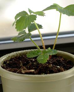 So einfach kannst du Pflanzen aus deinen Küchenabfällen ziehen
