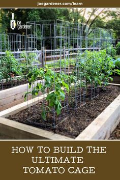 "My ""ultimate tomato cages"" at work in the GGWTV garden. Made from cattle panels. Magic Garden, Garden Trellis, Edible Garden, Garden Beds, Vegetable Garden, Garden Plants, Gardening Vegetables, Fence Garden, Tomato Trellis"