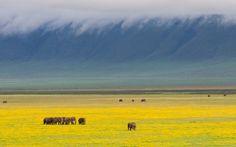 Lonely Planet: Ngorongoro crater, Tanzania