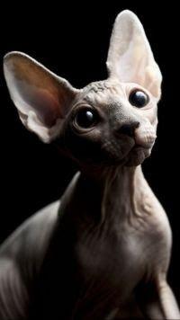 29 Sphynx Cat Iphone Wallpaper Di 2020