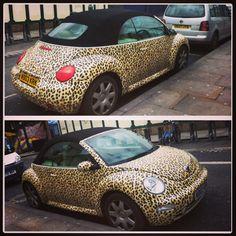 ~leopard print beetle ~