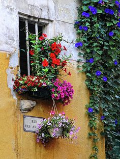 red mandevilla and pink, white, and red petunias in a tiny window