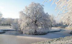 природа,  зима,  снег,  иней,  парк,  деревья,  река