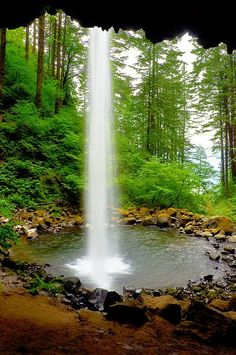 Ponytail Falls in the Columbia River Gorge, Oregon, USA....