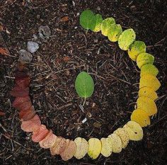 I love this! The life cycle of a leaf.